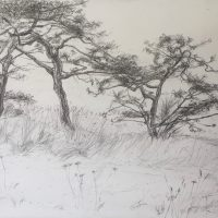 George Wallace - Beacon Hill Park, 1990, pencil