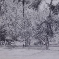 George Wallace - Beacon Hill Park, pencil