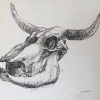 George Wallace - Skull of a Cow, ink sketch