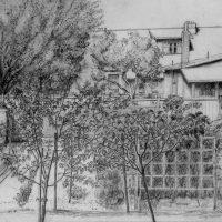 George Wallace - Back Garden, Huntington Place, Victoria, 1987, pencil