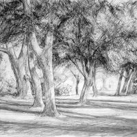 George Wallace - Beacon Hill Park, c.1988, pencil